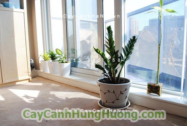 tieu-hong-mon3-560x420 Tuổi Tuất nên mua cây để bàn nào để đón tài lộc trong năm mới 2019?