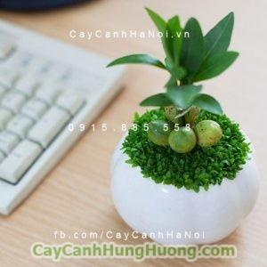 cay-bang-singapore2-768x576-300x300 Products